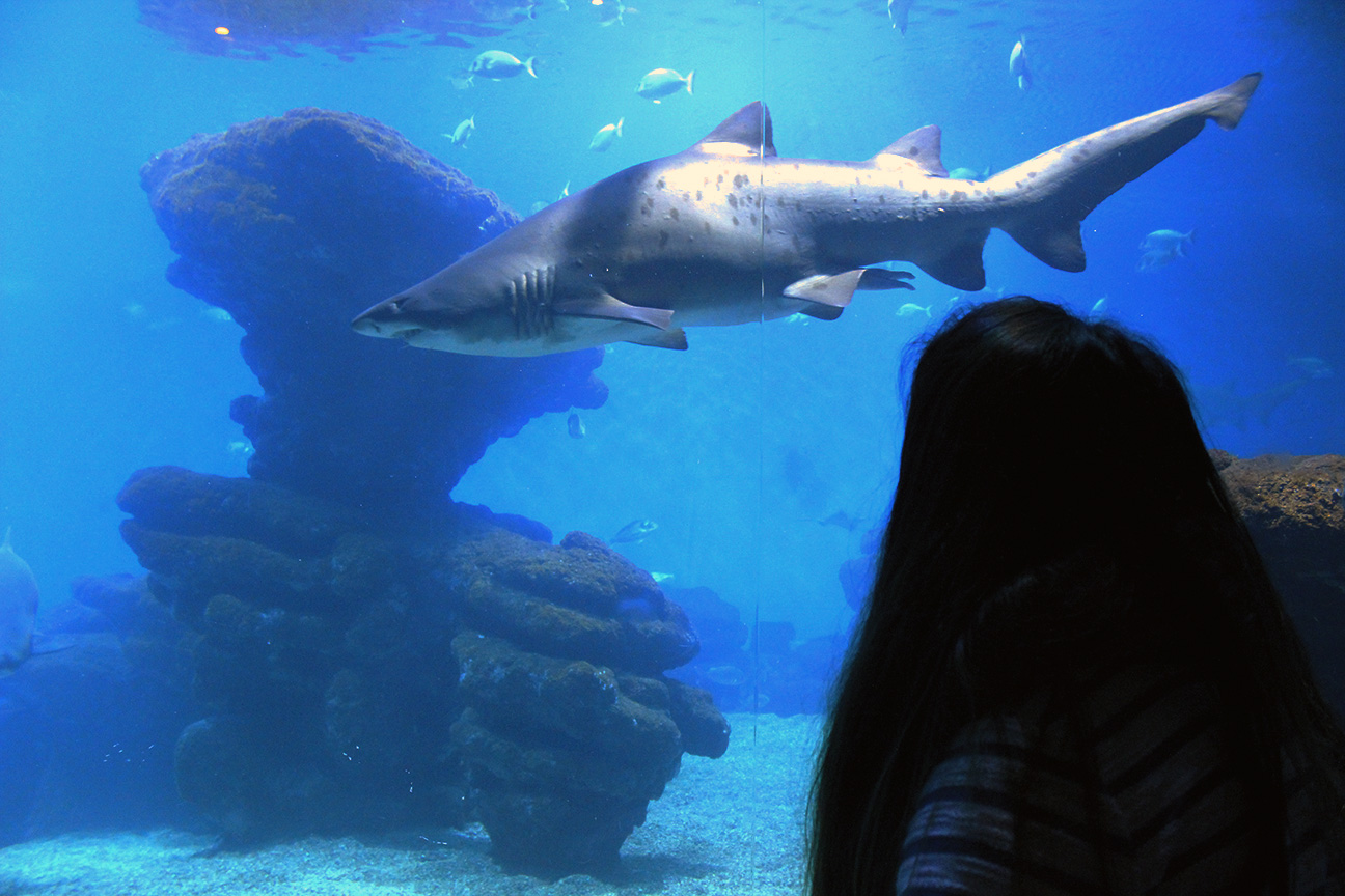 taxis-adaptados-palma-aquarium